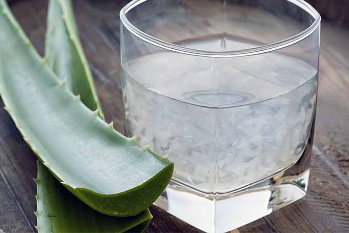 19 Superfood Add-Ins Including Aloe Vera | Foodal.com