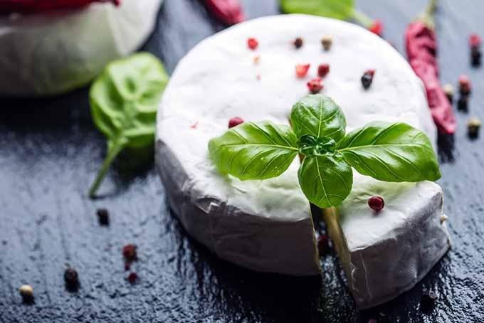 Brie Cheese   Foodal.com