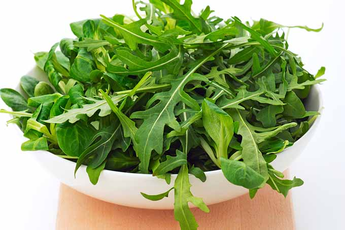 Bowl of Fresh Arugula | Foodal.com