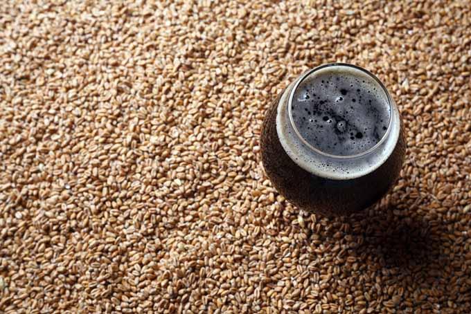 Tulip Glass on Malted Barley   Foodal.com