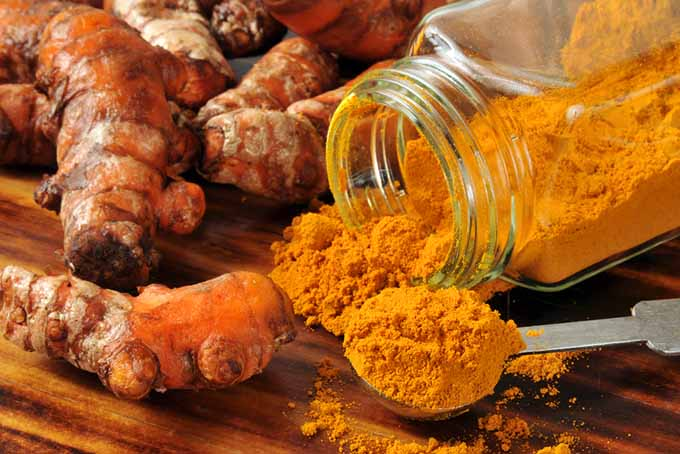 19Add-Ins Turmeric Powder | Foodal.com