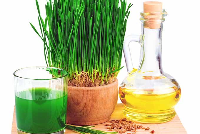 19 Add-Ins Wheatgrass Juice | Foodal.com