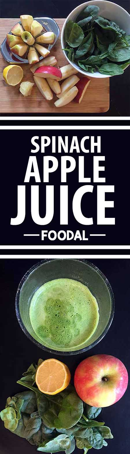 Looking for a simple way to break into the green juice craze? You'll love this mild-flavored and nutrient-packed option, made with fresh leafy greens, apples, and citrus. Read more now, learn about the nutritional impact you're in for, and get the recipe on Foodal! http://foodal.com/drinks-2/juice/spinach-apple-juice/