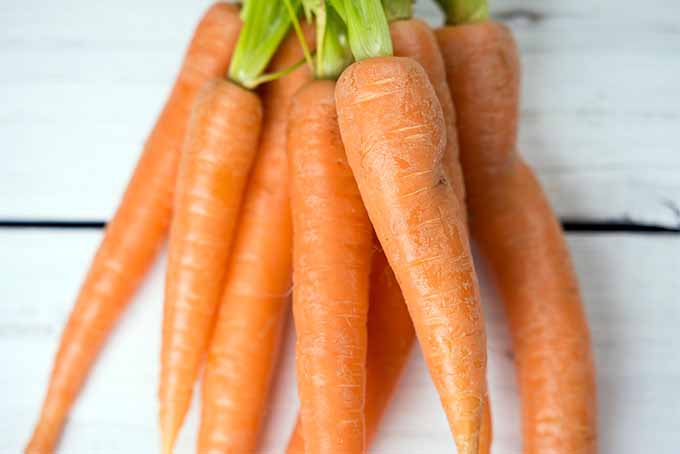 Bunch of Carrots | Foodal.com