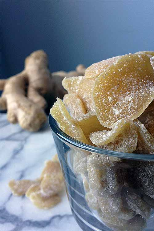 Make your own candied ginger at home with our recipe - make a great sweet treat, natural herbal remedy, has a long shelf life, and the flavored simple syrup that you wind up with as a result is great in cocktails! Read more: https://foodal.com/recipes/canning/crystallized-ginger-candy/ ‎