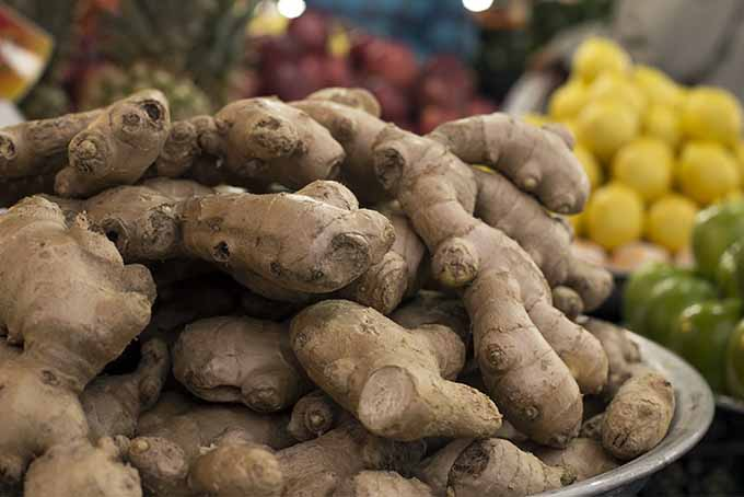 Fresh Ginger at the Market | Foodal.com