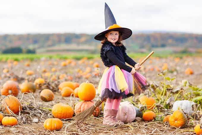 Girl in Pumpkin Patch | Foodal.com
