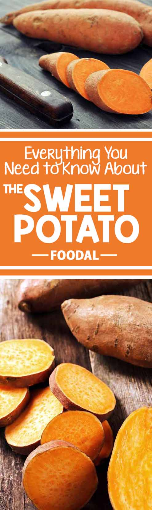 Stumped about the sweet potato? Is it a root or a tuber? Is it even related to other potatoes? There is so much to learn about this veggie, and Foodal has all the info you need! Before you start planning your fall favorites like creamy pies and marshmallow-topped casserole dishes, take a look at this article to read all about its tasty history, nutritional value, storage, and more. Continue reading now: http://foodal.com/knowledge/paleo/everything-about-sweet-potato/