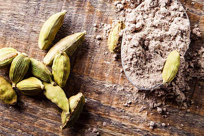 Cardamom Pods and Powder | Foodal.com
