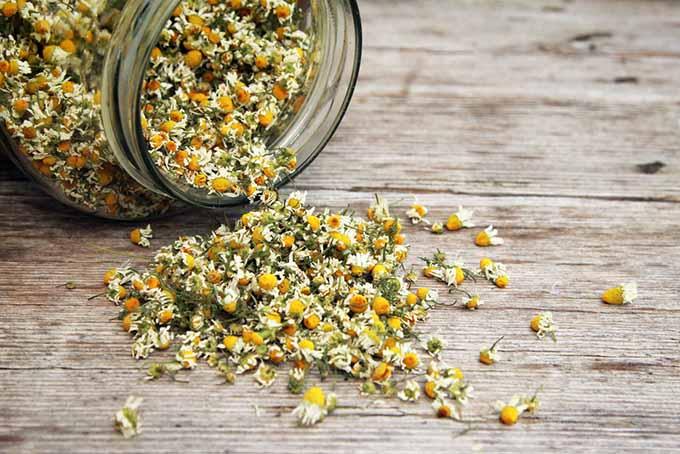 Chamomile Tea | Foodal.com