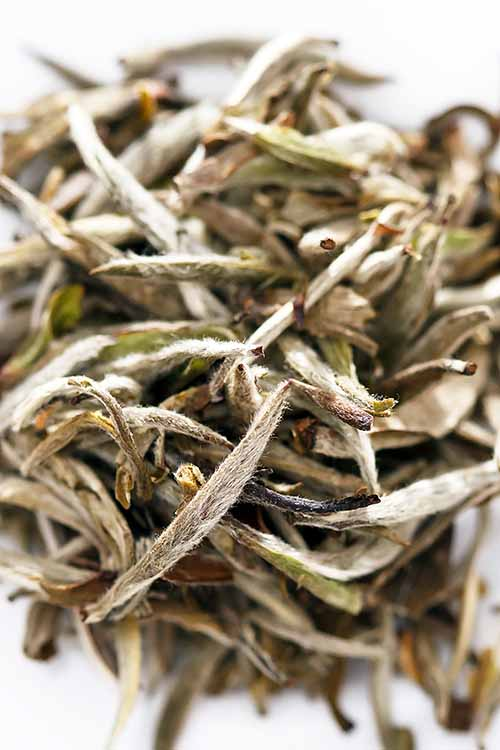Did you know some of your favorite varieties of tea, like the Assam pictured above, are available in white versions? Learn more, and check out some of our favorites: http://foodal.com/drinks-2/tea/white-tea/