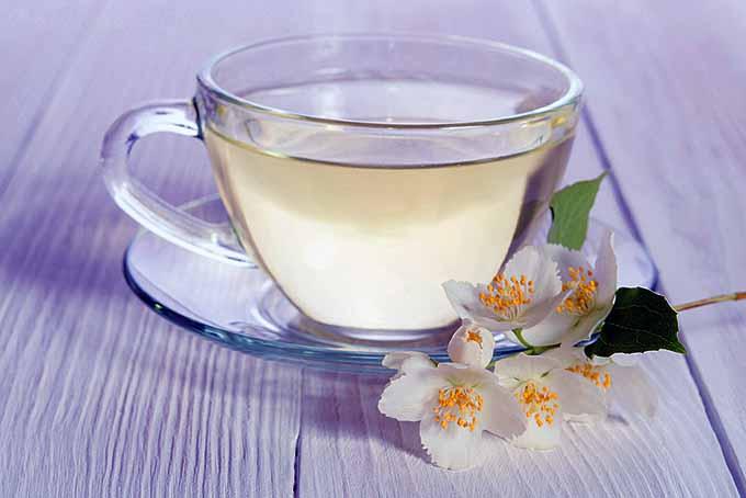 Cup of White Tea | Foodal.com