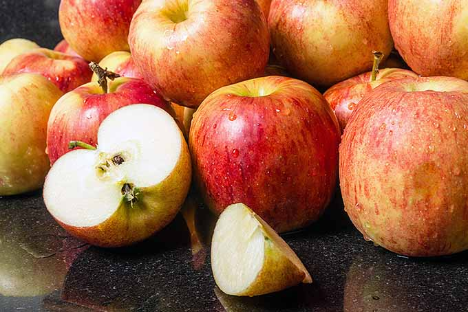 Jonagold Apples | Foodal.com