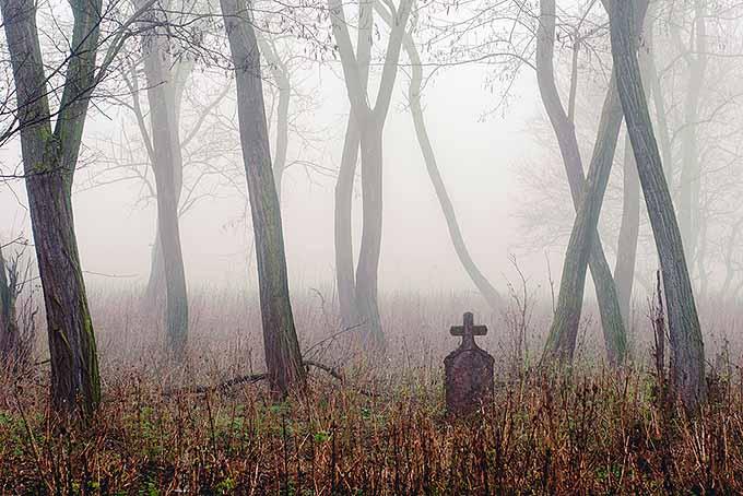 Misty Cemetery | Foodal.com