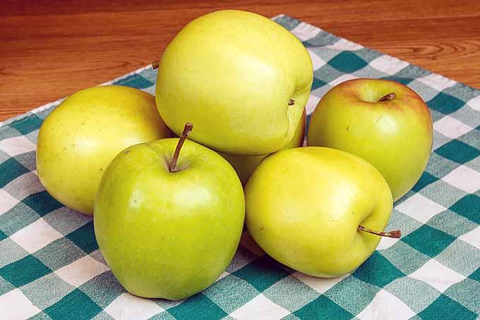 Mutsu Apples | Foodal.com