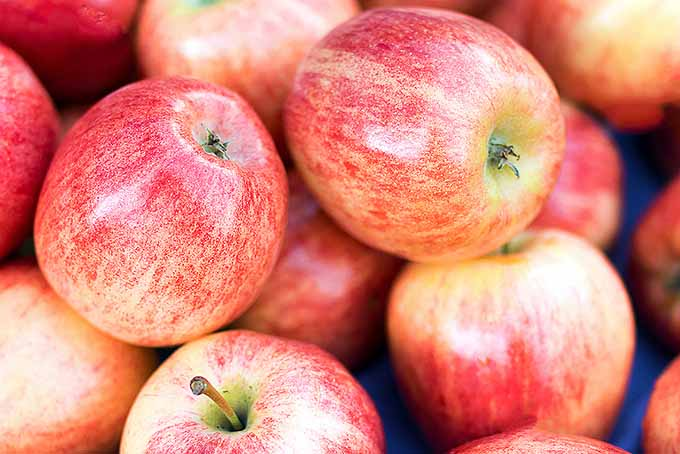 Pink Lady Apples | Foodal.com