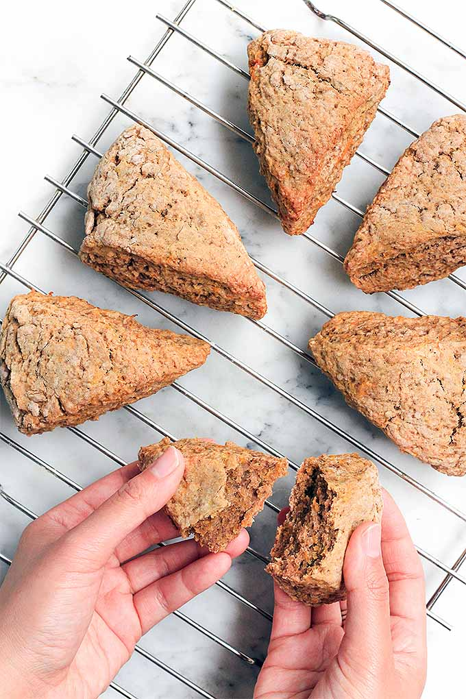 Pumpkin spice scones, still warm from the oven and served with a drizzle of local honey... these can be yours (and scones are easier to make than you might think)! Get the recipe: https://foodal.com/recipes/breakfast/pumpkin-spice-scones/