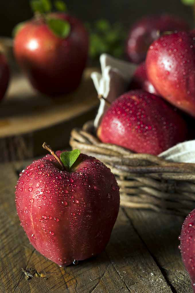 Get to know your apple! Did you know that there is a wide variety of different apple breeds, and each one serves a different purpose? Whether it's to eat raw or to put in your pie, we'll get to the core of each apple's purpose right here in this comprehensive guide: https://foodal.com/knowledge/paleo/choose-the-right-apple/