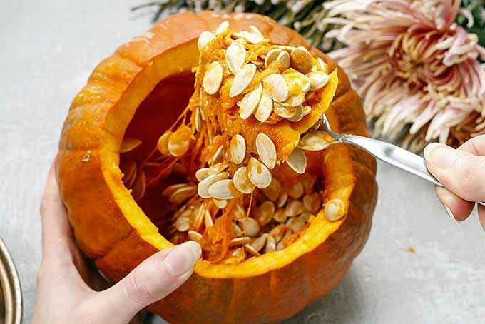 Reusing Pumpkin Seeds from Pulp | Foodal.com