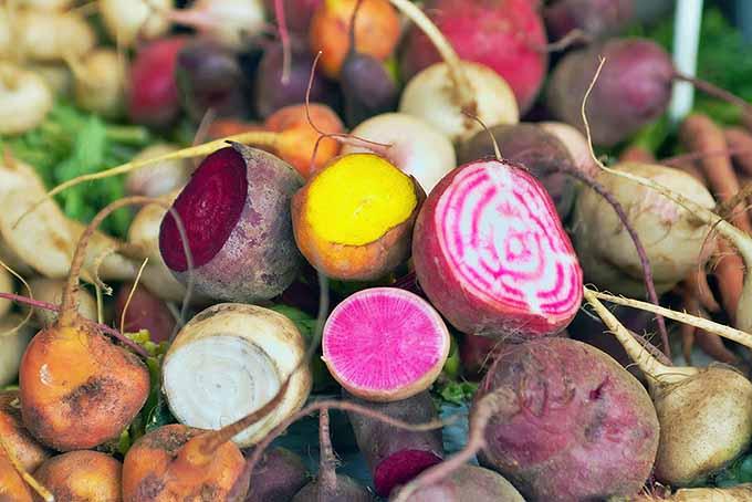 Root Crop Assortment   Foodal.com