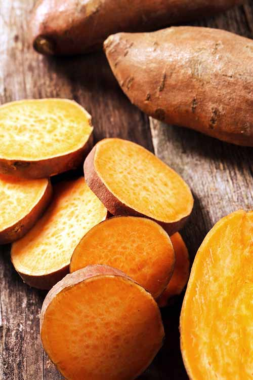 The sweet potato: unassuming, delicious, and a bit mysterious. Where did it come from? There's much to learn about this bright orange root crop! Find out more here, including nutrition benefits, history, and clever storage tips: http://foodal.com/knowledge/paleo/everything-about-sweet-potato/