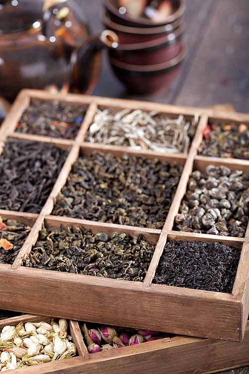 Is keeping your tea stored and organized correctly really all that important? The answer is: yes! Learn the best tips from our tea-loving pros right here at Foodal: https://foodal.com/knowledge/how-to/store-and-organize-tea/