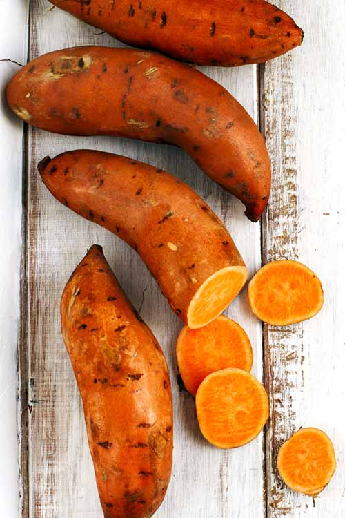 Intrigued by the humble sweet potato? There is so much to learn about this delicious, hearty root crop! Get all the info on them right here, from storage tips to fascinating historical tidbits: http://foodal.com/knowledge/paleo/everything-about-sweet-potato/