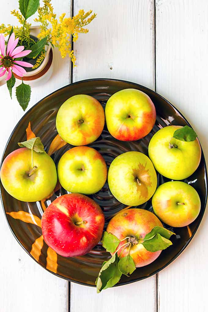 Ever wonder if you're using the right apple for cooking, salads, baking, and more? Find the answers in our comprehensive review of different apple varieties right here at Foodal: https://foodal.com/knowledge/paleo/choose-the-right-apple/