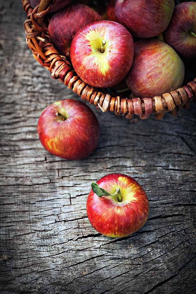 How do you know if you're using the right apple variety for your kitchen purposes? Whether its for preservation, baking, and more, we'll give you the lowdown on what to do with each apple according to its breed: https://foodal.com/knowledge/paleo/choose-the-right-apple/