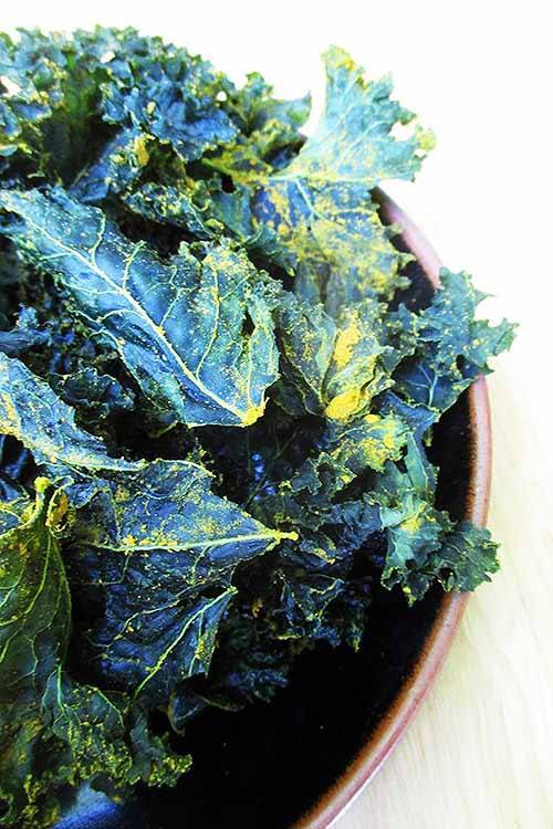 Getting tired of buying those pricy kale chips, just to have a guilt-free veggie snack? Check out our recipe on how to make your own crunchy, salty, even cheesy versions right in your dehydrator. Find the recipe here: https://foodal.com/recipes/kale-chips/