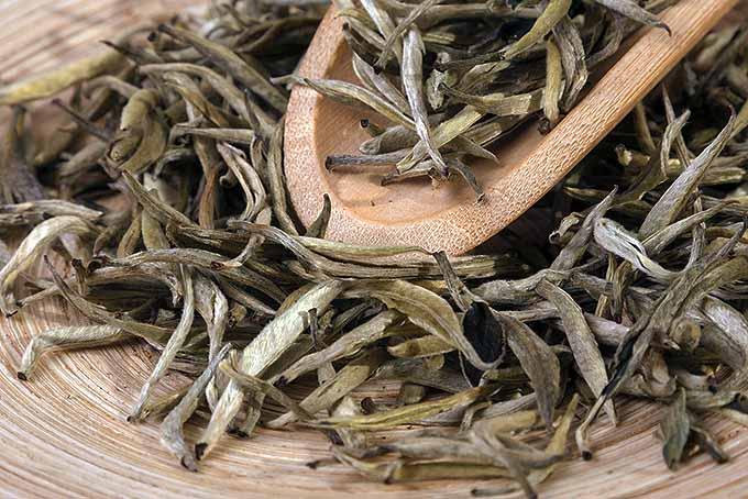 White Tea Leaves Closeup | Foodal.com