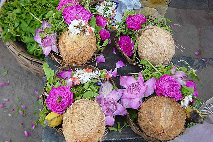 Coconuts and Flowers in India