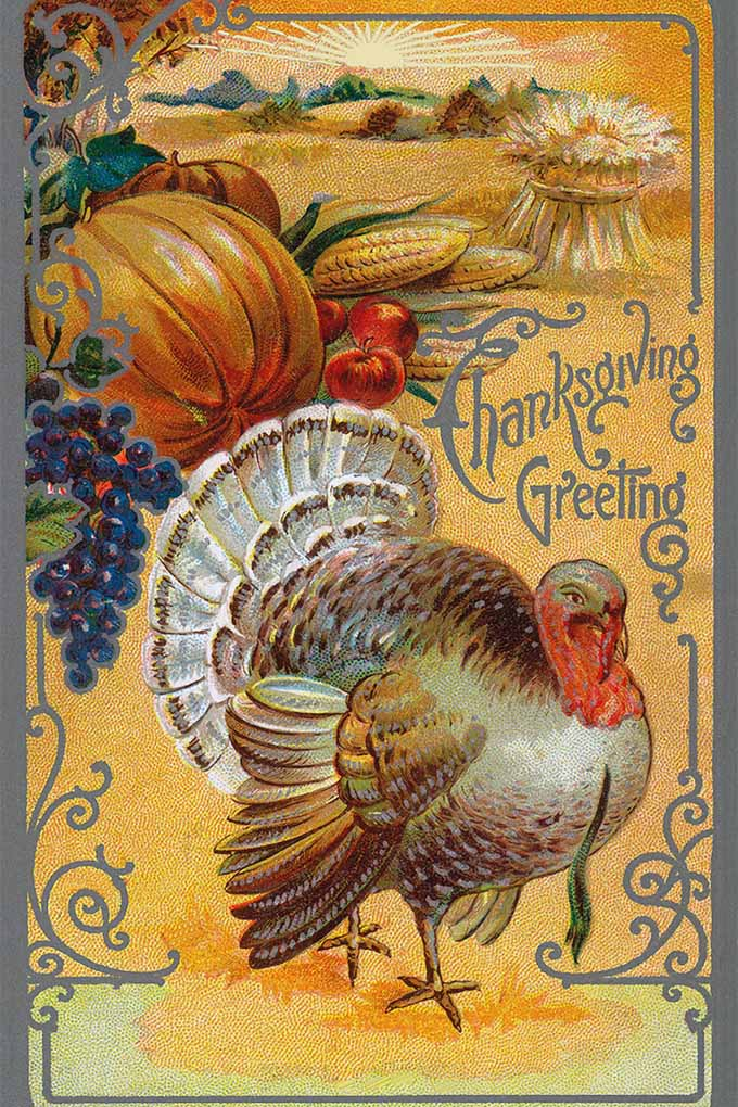 Thanksgiving is all about the food- but where did these traditions come from? Get a glimpse of the history of this feast-filled holiday- read more: https://foodal.com/holidays/thanksgiving/thanksgiving-foods-then-and-now/