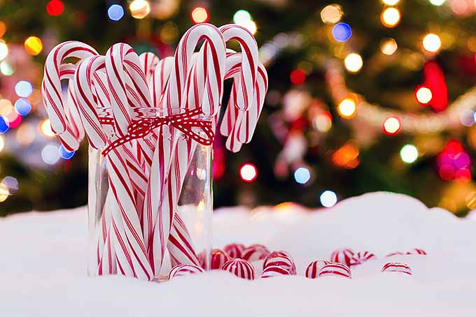 Christmas Candy Cane.The Twisted And Bent History Of The Candy Cane Foodal