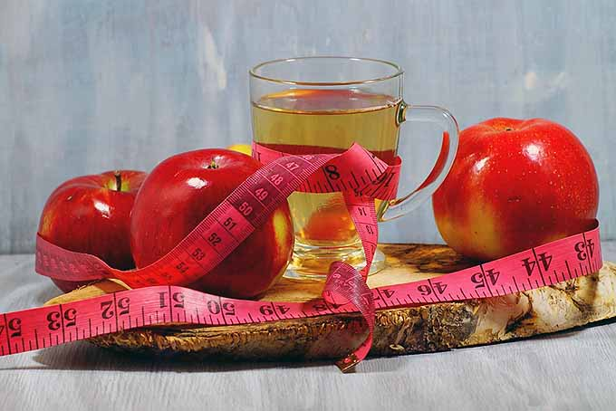 Apple Cider Vinegar Weight Loss | Foodal.com