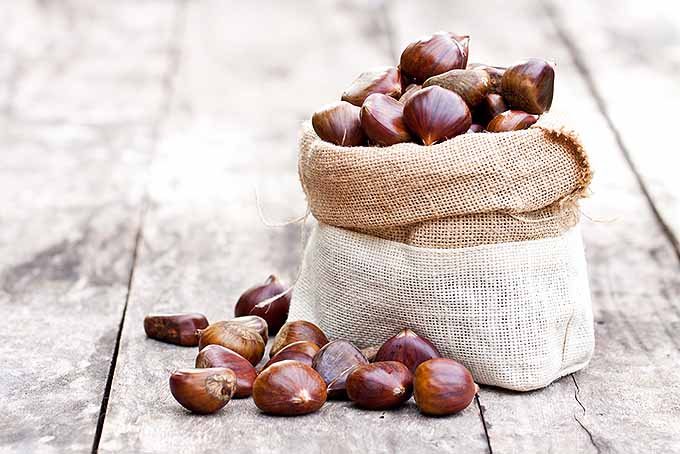 Bag of Chestnuts for Roasting | Foodal.com