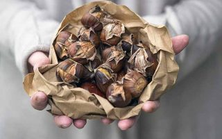 Roasted Chestnuts: A Globally Beloved Winter Treat