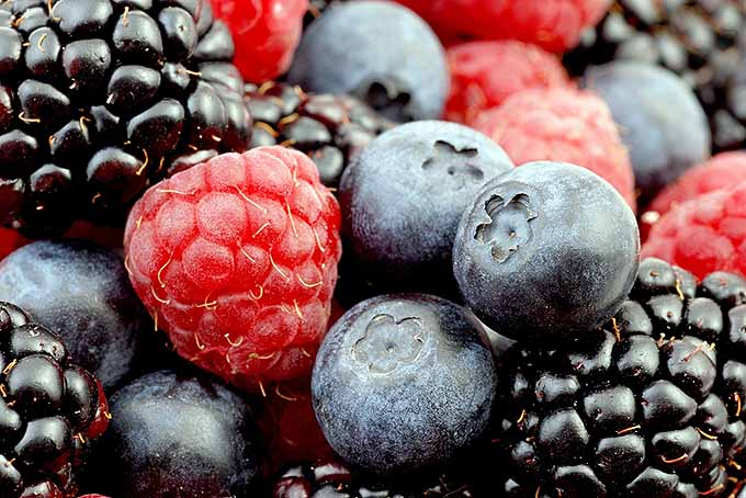 Dark Berries for Heart Health | Foodal.com
