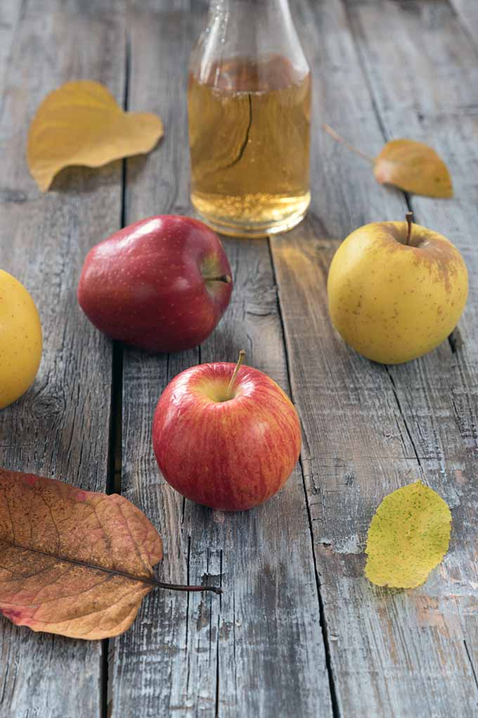 Want to separate the truth from the fiction surrounding apple cider vinegar's many health claims? Stock up on our research and explorations here at Foodal, where we'll be happy to tell you all about the real facts to this delicious fermented condiment and the benefits you're sure to get!: https://foodal.com/knowledge/paleo/health-benefits-apple-cider-vinegar