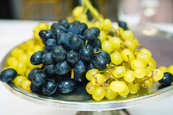 Grapes for New Year's Celebration | Foodal.com