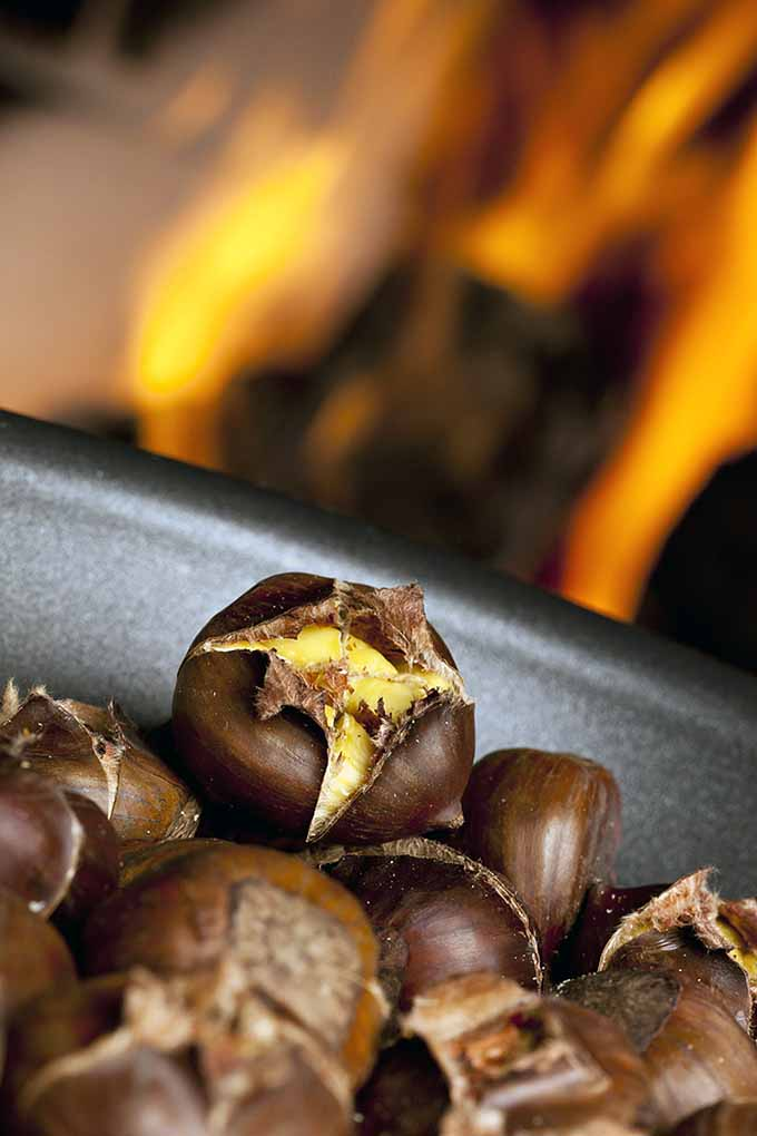 Roasted chestnuts aren't just a line from your favorite Christmas tune. They're a very real, roasty-toasty treat beloved by countries all around the world! Read their history and origins here: https://foodal.com/holidays/christmas/roasted-chestnuts-a-globally-beloved-winter-treat