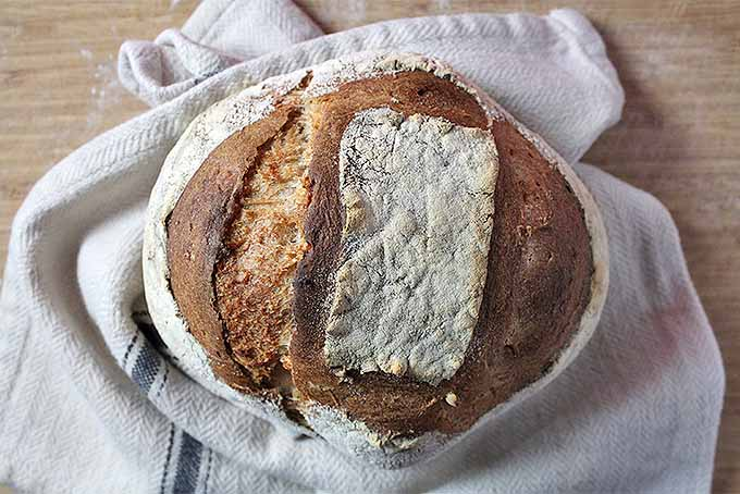 Top view of a round loaf of artisan sourdough bread on a white cloth kitchen towel with a blue-gray stripe, on a wooden countertop.