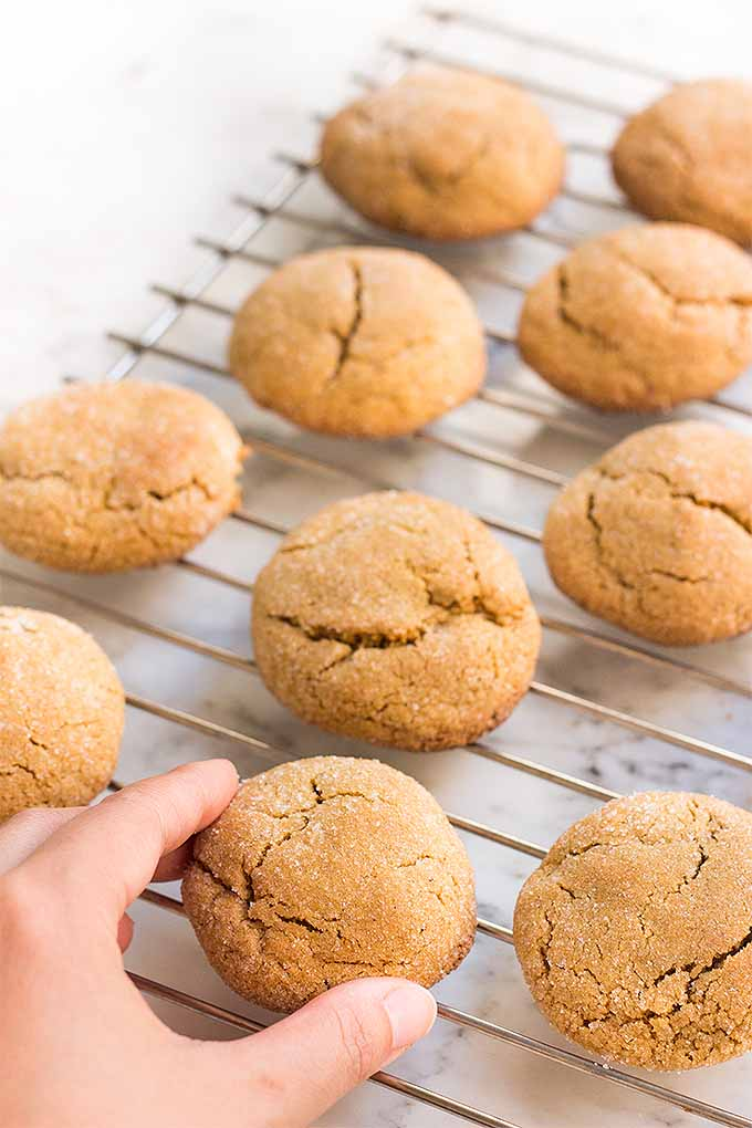 Gluten-Free Holiday Baking: Soft Ginger Cookies | Foodal.com