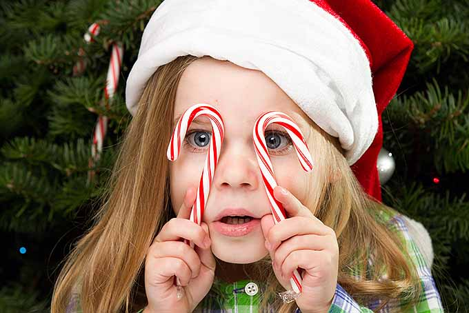 The Role of Candy Canes in Christmas History | Foodal.com