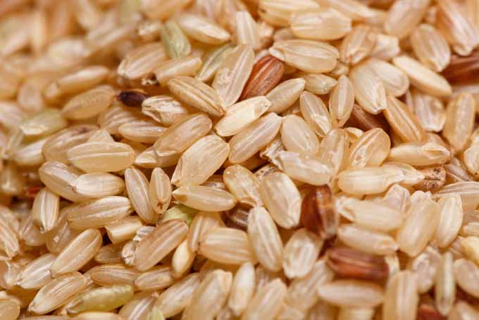 Opting for Wild Rice Variety | Foodal.com