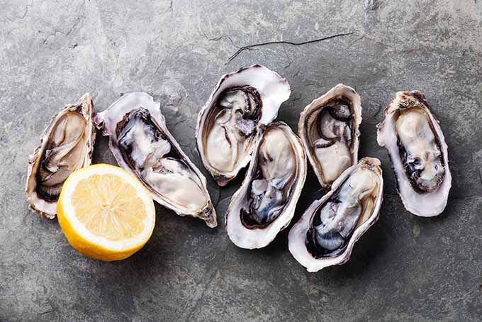 Oysters are a great source of zinc. | Foodal.com