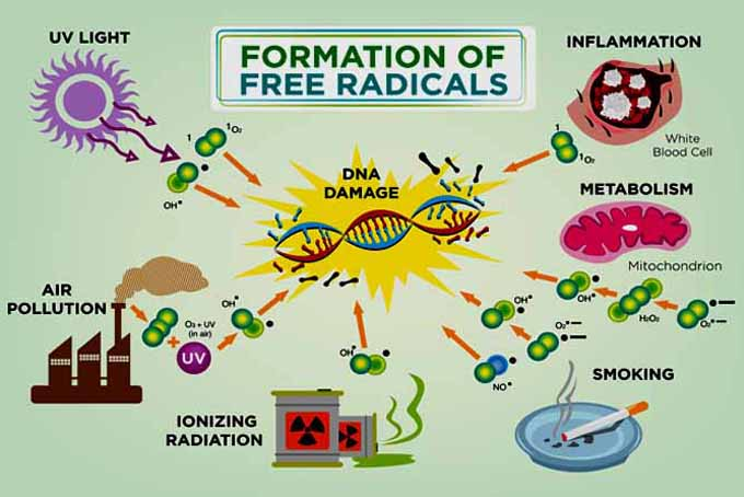 Fight Free Radical With Easy Antioxidant Tips | Foodal.com
