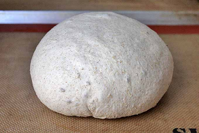 The Best Whole Grain Bread   Foodal.com