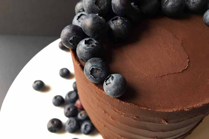 A cake frosted in chocolate ganache garnished with blueberries | Foodal.com