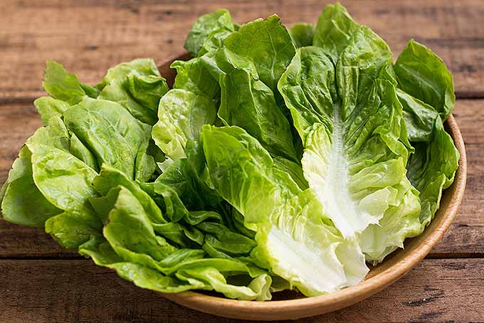 Romaine lettuce leaves serve as a fresh and healthy base for our spicy ground beef wraps. | Foodal.com